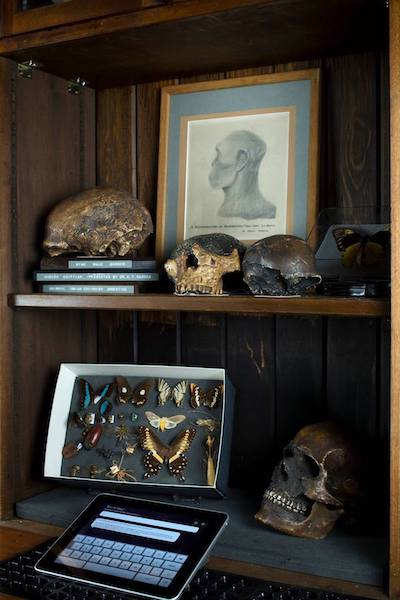 shelf in The Grant Museum of Zoology showing various skulls and butterflies